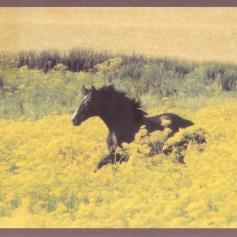 Konji_0006