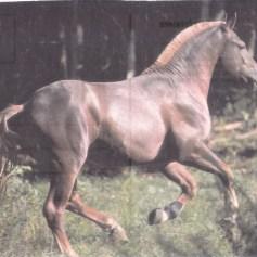 Konji_0017