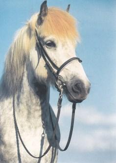 Konji_0019