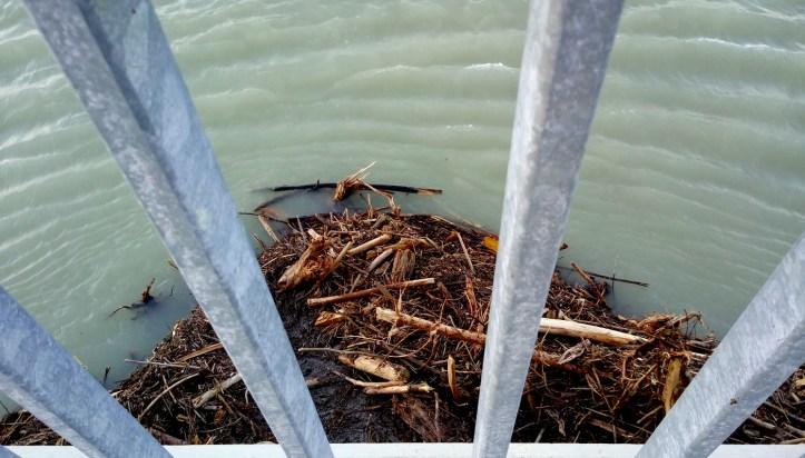 Neurejeni vodotok reke Drave