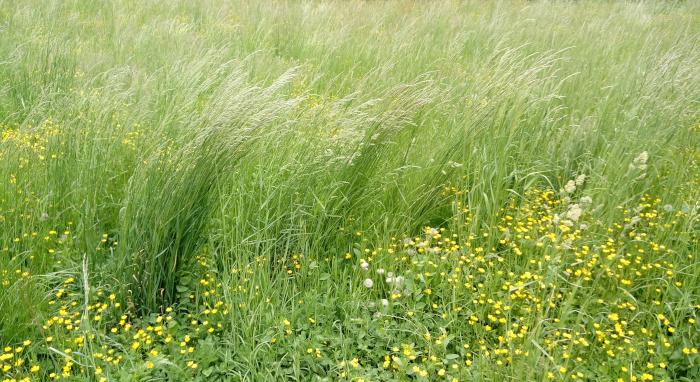 Trava v vetru, Foto: Tanja Jerebic