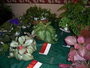 2010 HRGC Flower Show #2 008