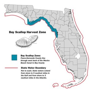 Early Opening of Bay Scallop Season