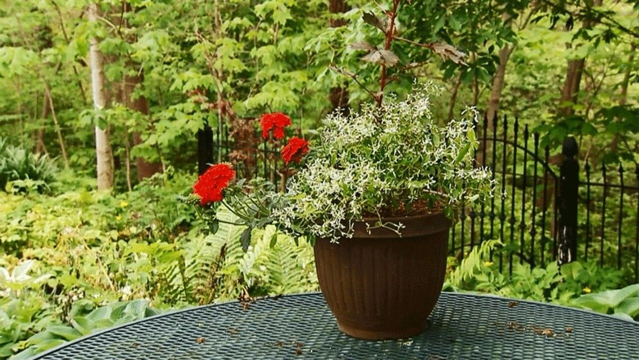 Lovely Combination Planting Container Gardening Ideas 10