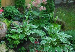 Small Shady Garden Ideas