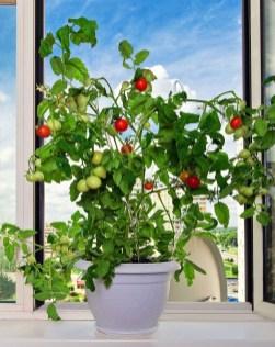 Extraordinary Indoor Garden Design And Remodel Ideas For Apartment 13