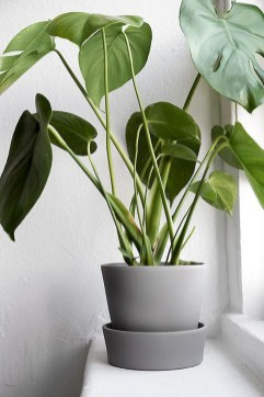 Extraordinary Indoor Garden Design And Remodel Ideas For Apartment 45