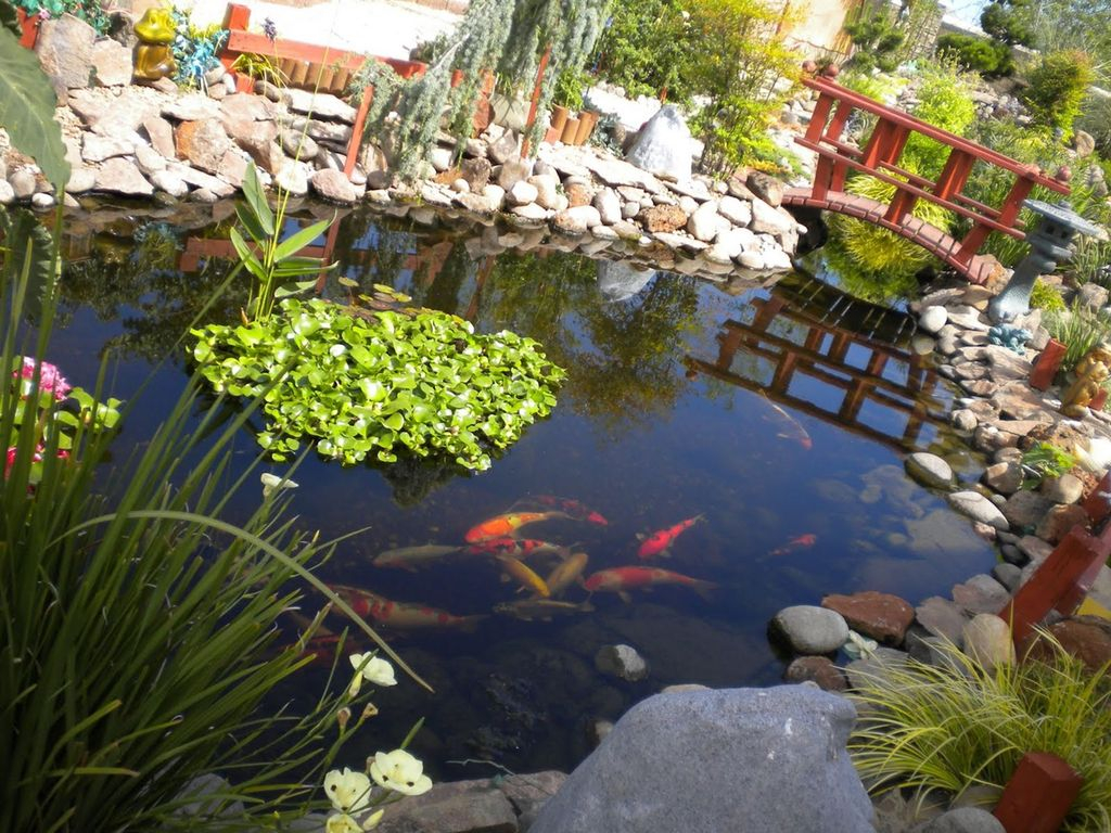 Cool Fish Pond Garden Landscaping Ideas For Backyard 05