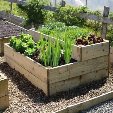 Exciting Ideas To Grow Veggies In Your Garden 01