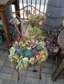 Pretty Fairy Garden Plants Ideas For Around Your Side Home 21