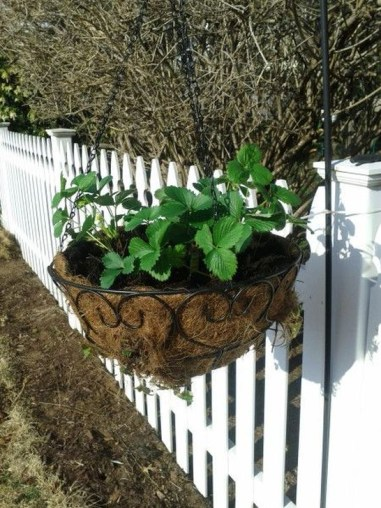 Beautiful Hanging Planter Ideas For Outdoor 37
