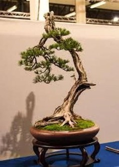 Inspiring Bonsai Tree Ideas For Your Garden 01