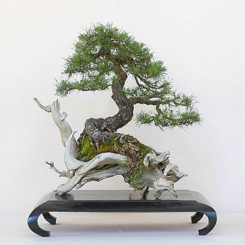 Inspiring Bonsai Tree Ideas For Your Garden 08