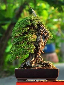 Inspiring Bonsai Tree Ideas For Your Garden 09