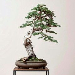 Inspiring Bonsai Tree Ideas For Your Garden 19