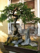 Inspiring Bonsai Tree Ideas For Your Garden 25