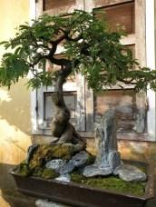 Inspiring Bonsai Tree Ideas For Your Garden 25