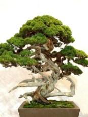 Inspiring Bonsai Tree Ideas For Your Garden 27