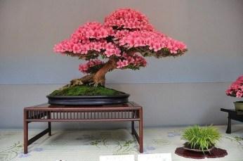 Inspiring Bonsai Tree Ideas For Your Garden 28