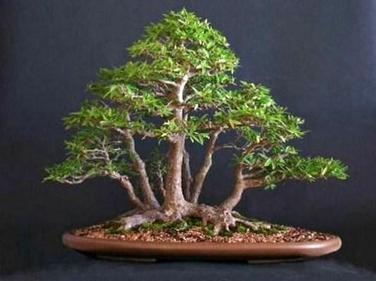 Inspiring Bonsai Tree Ideas For Your Garden 31