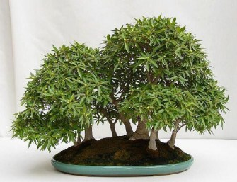 Inspiring Bonsai Tree Ideas For Your Garden 36