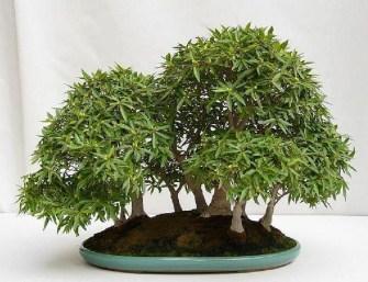 Inspiring Bonsai Tree Ideas For Your Garden 36