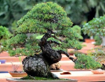 Inspiring Bonsai Tree Ideas For Your Garden 37
