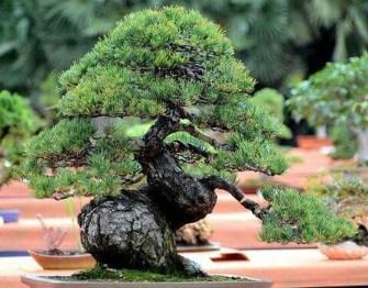 Inspiring Bonsai Tree Ideas For Your Garden 37