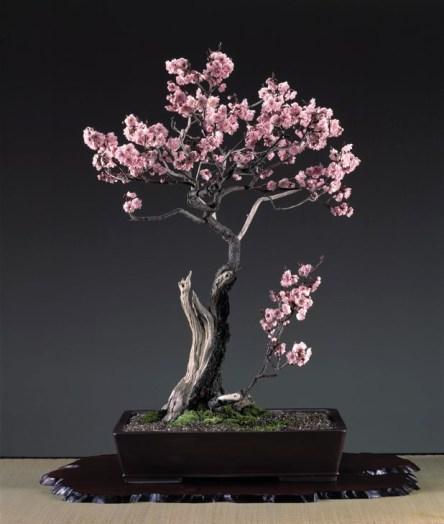Inspiring Bonsai Tree Ideas For Your Garden 38