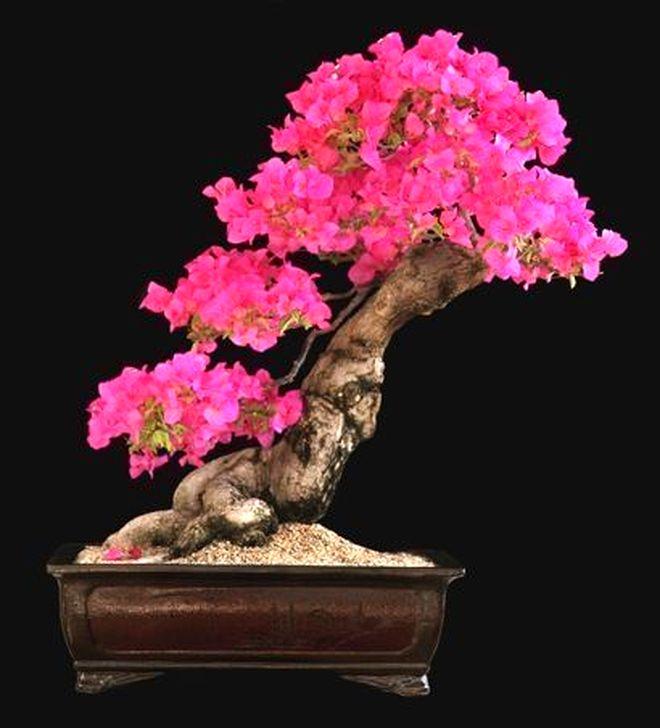 Inspiring Bonsai Tree Ideas For Your Garden 39