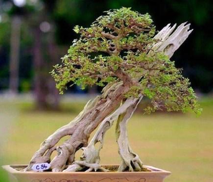 Inspiring Bonsai Tree Ideas For Your Garden 41