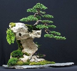 Inspiring Bonsai Tree Ideas For Your Garden 43