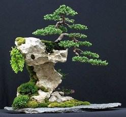 Inspiring Bonsai Tree Ideas For Your Garden 43