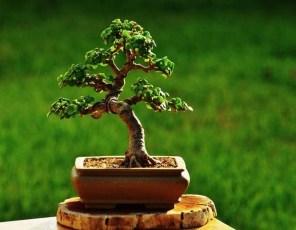 Inspiring Bonsai Tree Ideas For Your Garden 46