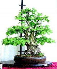 Inspiring Bonsai Tree Ideas For Your Garden 50
