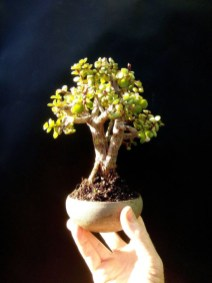 Inspiring Bonsai Tree Ideas For Your Garden 52