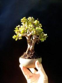 Inspiring Bonsai Tree Ideas For Your Garden 52