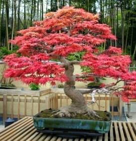 Inspiring Bonsai Tree Ideas For Your Garden 54