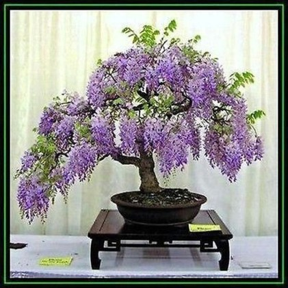 Inspiring Bonsai Tree Ideas For Your Garden 56