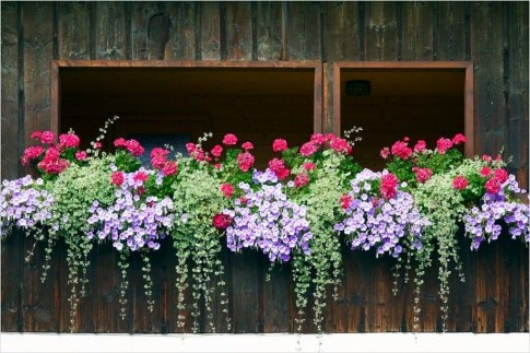 Wonderful Window Box Planters Yo Beautify Up Your Home 39