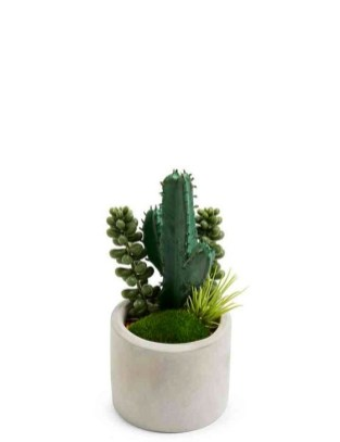 Cool Small Cactus Ideas For Home Decoration 07