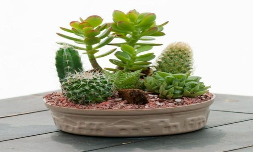 Cool Small Cactus Ideas For Home Decoration 09
