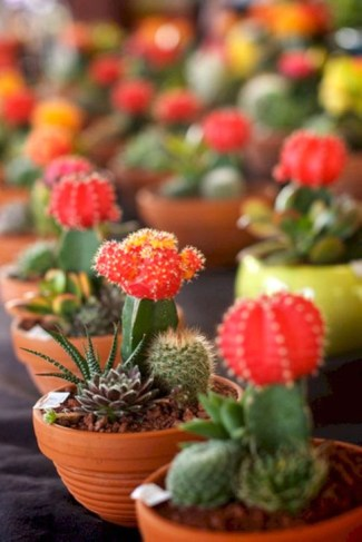 Cool Small Cactus Ideas For Home Decoration 10