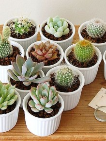Cool Small Cactus Ideas For Home Decoration 14