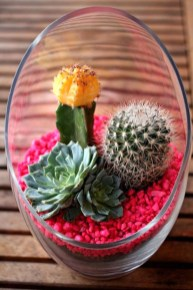 Cool Small Cactus Ideas For Home Decoration 16