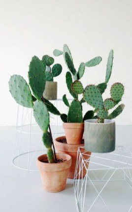 Cool Small Cactus Ideas For Home Decoration 19