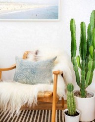 Cool Small Cactus Ideas For Home Decoration 25