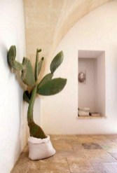 Cool Small Cactus Ideas For Home Decoration 26