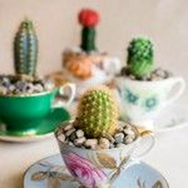 Cool Small Cactus Ideas For Home Decoration 32