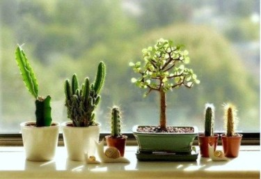 Cool Small Cactus Ideas For Home Decoration 33